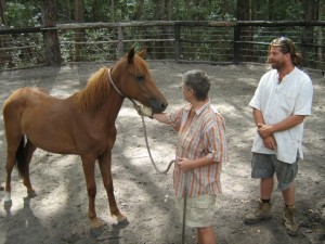 Adopting a Brumby from the South East Queensland Brumby Association