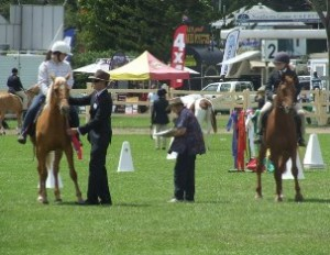 ABHR Open Ridden Class at the 2009 Murwillumbah Show