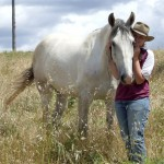 lucky WA Brumby has a new home