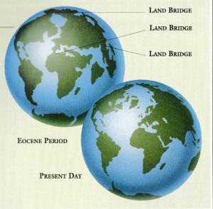 Eocene Land Brigdes