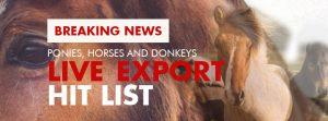 RSPCA Live Export Horses