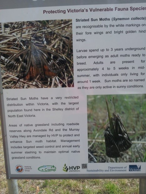 triated Sun Moth informative sign in Shelly district of North East Victoria (17-March 2014)