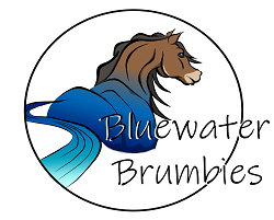 Bluewater Brumbies logo